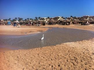 Soma Bay, 14. November