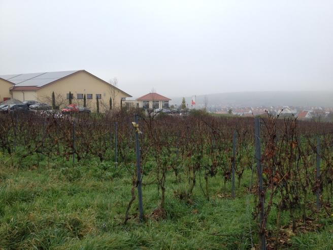 Blick auf das Weingut im Novembernebel.